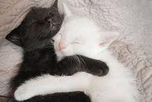 Cat Stuffs / because... kittehs <3