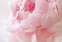 flora, peonie e rose