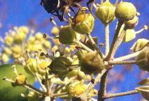 Nuttige beestjes / Bijen  en bijen houden en overige nuttige beestjes