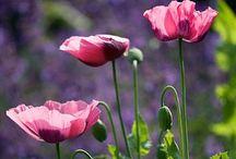 Trädgård / Trädgårdsinspiration. Ideas for gardening