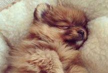 Soo fluffy ^_^