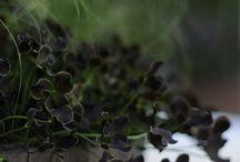 Trädgård-krukor