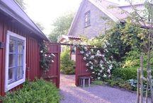 Trädgård-design