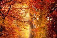 Autumn / Inspiration for autumn