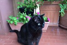 A...MICI / Guardare un gatto è come guardare un fuoco, si rimane sempre incantati. Giorgio Celli
