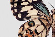 Farfalle e libellule / Un fiore caduto,pensavo,sta risalendo sul ramo. Ma no: una farfalla. (Arakida  Moritake)