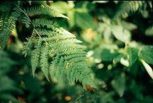 Macro. Nature. Plants