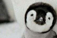 Penguin (Animals) / by Mariangeles Ch J