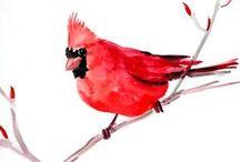 Cardinals Birds