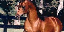Arabians b. in Sweden