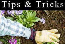 G_tips&trixs
