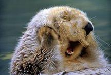 |it's so fluffy i'm gonna die!|