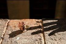 Exposición de Joyeria, Fotografía y Cerámida / Los artistas que han expuesto. Josep Bertran (joyas), Eulàlia Naveira (ceramista), Manel Sanz (Fotògrafo), Mercè Ribera(cerámica)  Marie-Pierre Teuler, (fotógrafa)