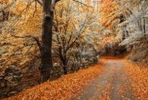 LOMBARDIA By Foot / 24 Parchi Regionali, 78 parchi di di interesse locale, 65 riserve naturali, 29 monumenti naturali... Un'intera regione da attraversare a passo lento / 24 regional parks, 78 parks of local interest, 65 nature reserves, 29 natural monuments. Tips for trekking #inLombardia