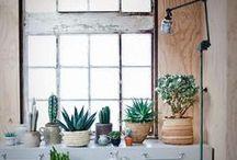 Indoor views / design project