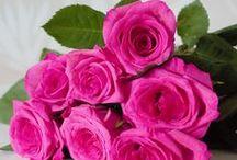My own / http://kotihiirivarvikossa.blogspot.fi/
