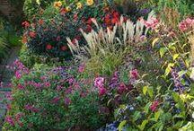 Gardening / by Lucy Waltz