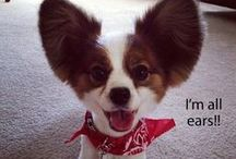 Funny Dogs Daily / Our daily feed of adorable & funny dogs to brighten up your day! :)