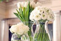Flowers & Plants White