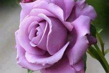 Flowers & Plants Purple