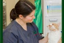 Laser and Holistic Therapies at Leesburg Vet / Leesburg Veterinary Hospital offers holistic healing therapies to  complement our traditional veterinary medical care.