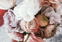 bloom inspo 〰〰〰