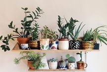 Cactus, plantes et balcon