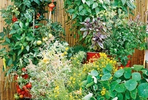 HOUSE PLANTS & GARDENING / from house plants to flowers to ... anything garden