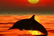 Sun, sand and sunsets / The ocean always brings out the best in me / by Lori Crowder