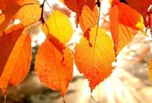 Fall / by Kirstie Small