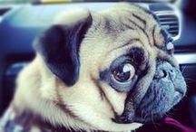 PUGS / My #Fifa #pug
