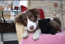 Cute Pictures / A collection of cute doggy pictures
