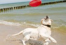 Camping mit Hund / Damit Euer Hund auch in den Ferien bei Euch sein kann, darf er auf einigen unserer Plätze mit Euch im Bungalowzelt übernachten. So könnt Ihr gemeinsam mit Eurem Vierbeiner gemeinsam freie Ferien verbringen.