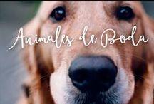 Animales de Boda / Porque tu mascota es uno más de la familia, aquí teneis una selección de unos invitados muy especiales.
