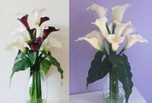 Real Touch Calla Lily Flower Arrangements / Real Touch Calla Lily Flower Arrangements permanently set in Artificial Water