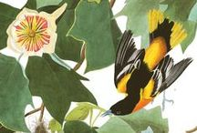 Ornithology illustration, beautiful birds