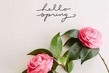 Spring Has Sprung / by SCRATCH