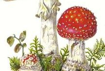 Mushrooms & Fungus