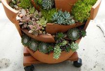 Gardening/Giardinaggio