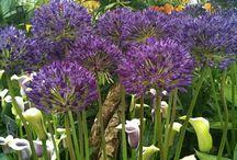 Gardening: Blue&Purple colour schemes