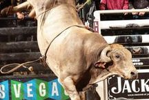 RODEO--BUCKING BULLS / by Lynn LaGrone