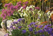 Il mio giardino - Mi jardín - My garden - Mein Garten - Mon jardin / Piante e fiori Plantas y flores Plants and flowers Pflanzen und Blumen Plantes et fleurs