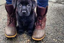 Der Hund ist das einzige Lebewesen dass dich mehr liebt als sich selbst / Der Hund ist das einzige Lebewesen das dich mehr liebt als sich selbst