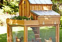 sheds and chicken coops