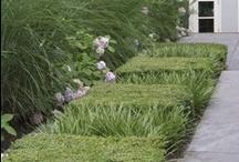 Ideas jardineria