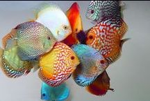 """FISH / An aquarium is a great stress reliever.  (Of course you have to have fish in it)  They take a """"little bit"""" of work, but worth it.  / by PHYLLIS J"""