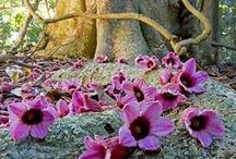 Bellezze natura