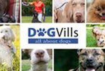 DogVills /  Hi, welcome to Dogvills Board where we pin all the best posts from our blog. Here you can find dog training tips, delicious dog treats and recipes, funny quotes and all the great accessories for our furry friends.