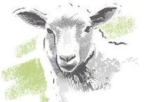 COMPO BIO Langzeit-Dünger mit echter Schafwolle / Schafwolle ist reich an Nährstoffen und zeichnet sich durch eine hohe Wasserspeicherkapazität aus. Die COMPO BIO Langzeit-Dünger nutzen die hervorragenden Eigenschaften dieses Naturproduktes.