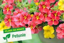 Pflanzen des Monats / Jeden Monat präsentieren wir hier eine Pflanze in Bild und Text.
